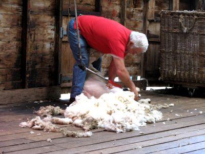 Farm Shear